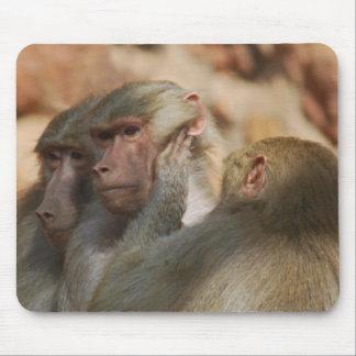 Affe kümmerte sich für gegenseitig mauspads