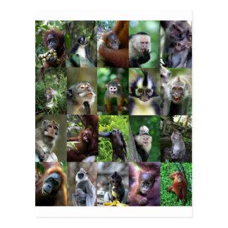 Affe-Primat Montage Postkarte