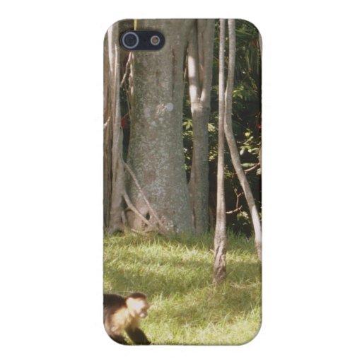 Affen iPhone 5 Hüllen
