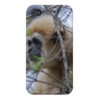 Affen-Wächter der heiligen Wälder iPhone 4 Etuis