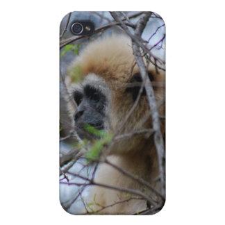 Affen-Wächter der heiligen Wälder iPhone 4 Schutzhüllen