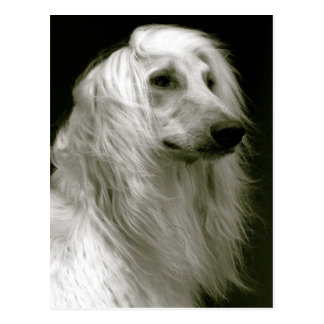 Afghan hound postkarte