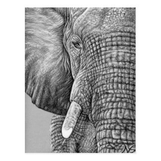 African Elephant Postkarte