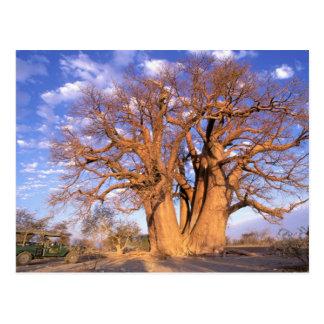 Afrika, Botswana, Okavango Dreieck. Baobab Postkarte