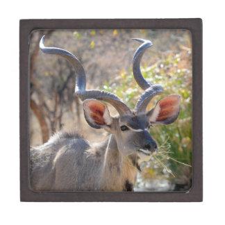 Afrika größeres Kudu Kiste