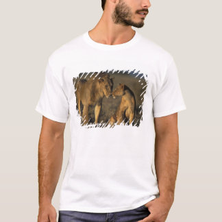 Afrika, Kenia, Büffel entspringt nationale T-Shirt