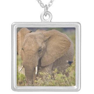 Afrika. Kenia. Elefant bei Samburu NP Versilberte Kette
