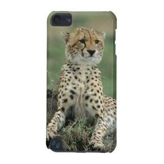 Afrika, Kenia, Geparde iPod Touch 5G Hülle