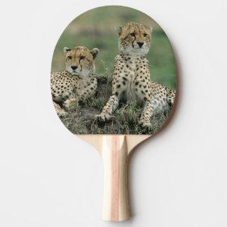 Afrika, Kenia, Geparde Tischtennis Schläger