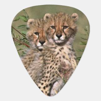 Afrika; Kenia; Masai Mara; Drei Gepardjunge Plektrum