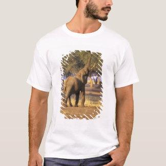 Afrika, Kenia, Masai Mara. Elefant (Loxodonta T-Shirt