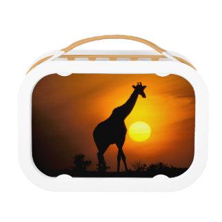 Afrika, Kenia, Masai Mara. Giraffe (Giraffe Brotdose