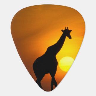 Afrika, Kenia, Masai Mara. Giraffe (Giraffe Plektron