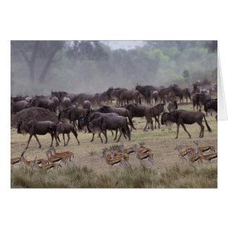 Afrika, Kenia, Masai Mara. Herden der Gazelle, Karte