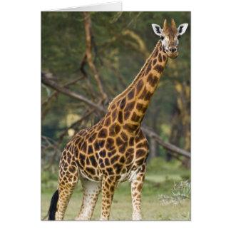 Afrika. Kenia. Rothschilds Giraffe in See 2 Karte