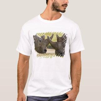 Afrika. Kenia. Weiße Rhinos, die in See kämpfen T-Shirt