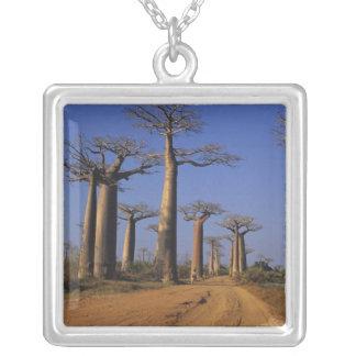 Afrika, Madagaskar, Morondava, Baobab-Allee Versilberte Kette