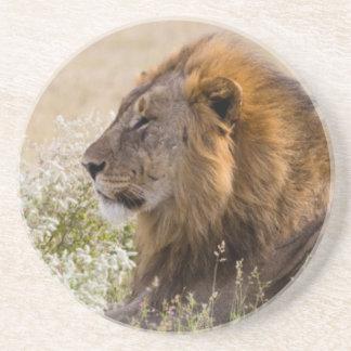 Afrika, Namibia, Etosha Nationalpark 2 Getränkeuntersetzer