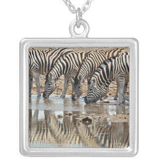 Afrika, Namibia, Etosha NP. Burchells Zebra Versilberte Kette