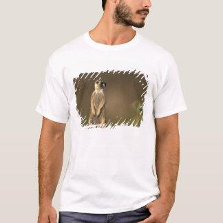 Afrika, Namibia, Keetmanshoop, Meerkat (Suricate T-Shirt