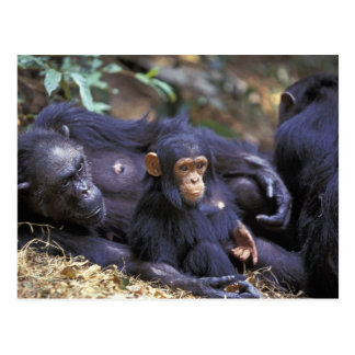 Afrika, Ostafrika, Tansania, Gombe NP Frau Postkarte