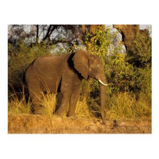 Afrika, Simbabwe, Nationalpark der Victoriafälle Postkarte