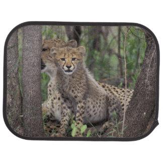 Afrika, Südafrika, Phinda Konserve. Gepard Automatte