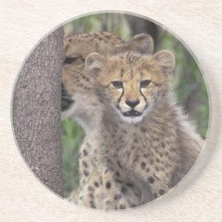 Afrika, Südafrika, Phinda Konserve. Gepard Sandstein Untersetzer