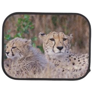 Afrika, Südafrika, Tswalu Reserve. Geparde Automatte