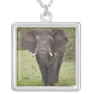 Afrika. Tansania. Elefant an Ngorongoro Krater, Versilberte Kette