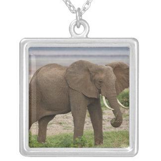 Afrika. Tansania. Elefant in See Manyara NP Versilberte Kette