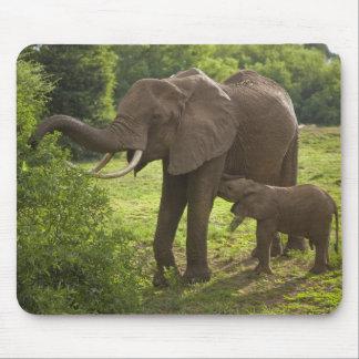 Afrika. Tansania. Elefantmutter und -kalb bei 2 Mousepads
