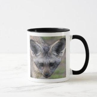 Afrika. Tansania. Schläger-Ohriger Fox bei Ndutu Tasse