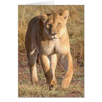 Afrika, Tansania, Serengeti. Löwe und Löwin Karte