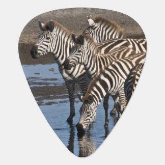 Afrika. Tansania. Zebras, die herein bei Ndutu Plektron