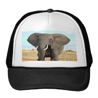 Afrikaner-Bush-Elefant, der zum Erfolgsziel marsch Trucker Mützen