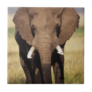 Afrikaner-Bush-Elefant Keramikfliese
