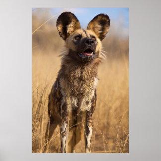 Afrikaner gemalter wilder Hund Poster
