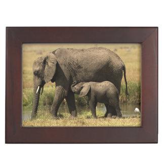 Afrikanische Elefanten Erinnerungsdose