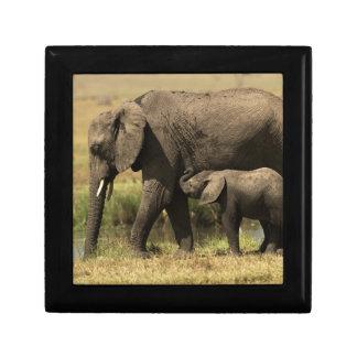 Afrikanische Elefanten Erinnerungskiste