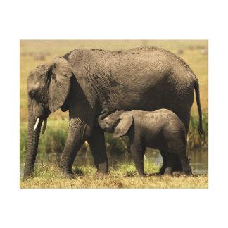 Afrikanische Elefanten Leinwanddruck