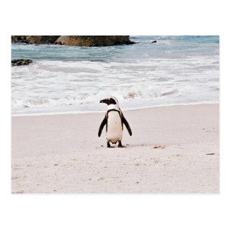 Afrikanische Pinguin-Postkarte Postkarte