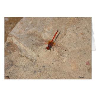 Afrikanische rote Libelle Karte