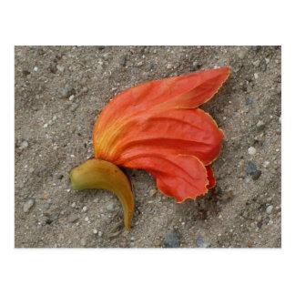 Afrikanische Tulpe-Baum-Blumen-Postkarte Postkarte