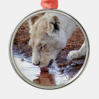 Afrikanische weiße Löwe-Reflexion Silbernes Ornament
