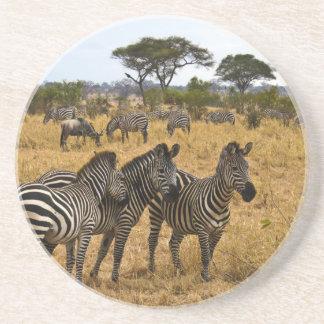 Afrikanische Zebras Getränkeuntersetzer