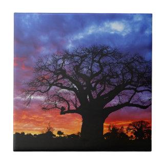 Afrikanischer Baobabbaum, Adansonia digitata 2 Keramikfliese