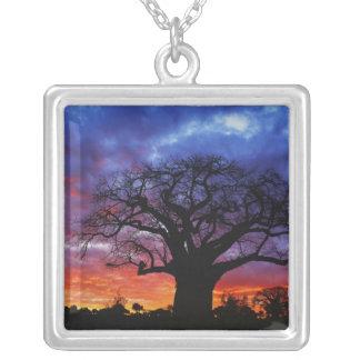 Afrikanischer Baobabbaum, Adansonia digitata, 2 Versilberte Kette