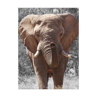 Afrikanischer Buschelefant Leinwanddruck