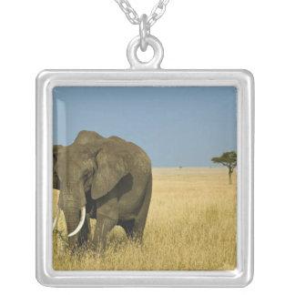 Afrikanischer Elefant, der im hohen Sommergras Versilberte Kette